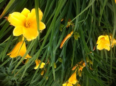 Gelbe Blüten - Kölner Flora