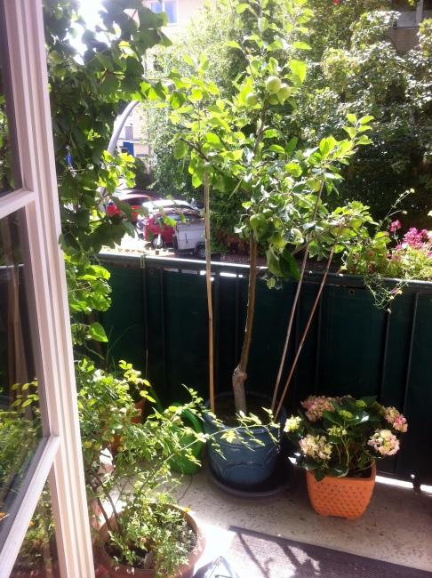 Blick auf den Balkon Juli 2014