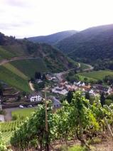 Rotwein-Wanderweg im September 2014-2